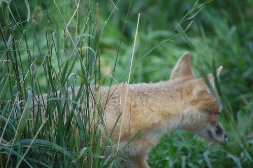 Calgary Zoo Sept 1, 2008 929.jpg A