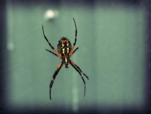 spider up close lomo