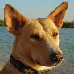 Mijn hond en vriend Bob, My dog and friend. Sama xarit Goor gi Bob. (babacar1) Tags: pictures africa dog nice bob hond afrika mister mooi senegal gi goor meneer sokone babacar1