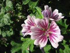 IMG_4782 (nuschu) Tags: florafauna
