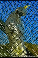 Isolamento.- ! (Nicole .-) Tags: fauna jaula colores ave pajarito isolamento fotografa encierro zoologico nicoleconstantini