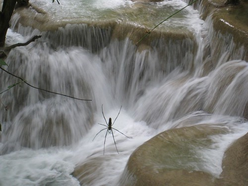 A BIG spider makes for a little more interesting waterfall shot