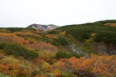 盤ノ沢から見た旭岳の禿頭