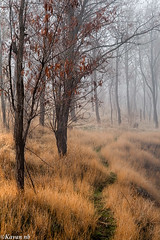 A Way Through the Forest (kavan.) Tags: autumn orange tree fall nature wet grass yellow fog forest canon way iran sigma iranian hazy 1770 kurdistan sanandaj kavan kordestan 400d