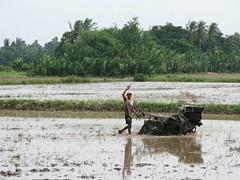 Everyone waves in Vietnam's Mekong Delta area (lboogie) Tags: man southeastasia working vietnam farmer plow mekongdelta 2008 ricefields rtw muddy vietnamesepeople ricepaddys november2008 mekongtour
