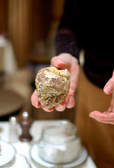 White truffle at l'Ambroisie