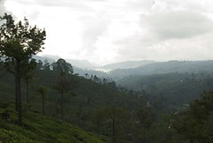 tea country (clurr) Tags: srilanka teaplantation castlereaghlake