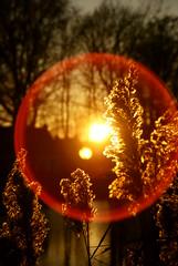 Tuindorpvijver, Hengelo (o) - kerst 2008 (lambertwm) Tags: light sunset backlight licht zonsondergang tramonto sonnenuntergang pôrdosol lensflare flare backlit 日落 overijssel viewcount tegenlicht puestadelsol hengelo coucherdusoleil againstthelight غروب 日没 tuindorpvijver hengeloo lwmfav