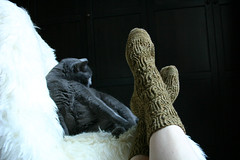 socks-and-the-kitty4