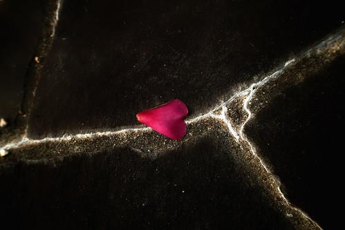 fallen petal