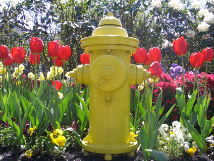 41tulips_water_hydrant