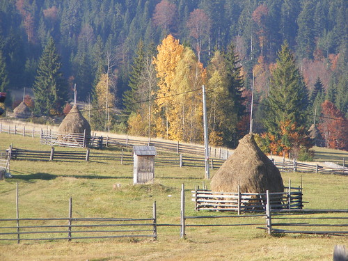 hay cocks in Romania