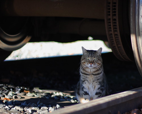 This cat was hanging out under one of the trains and watching the world go by. Not a bad place to hang out.
