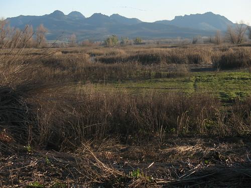 Sacramento valley landscape with Sutter Butte
