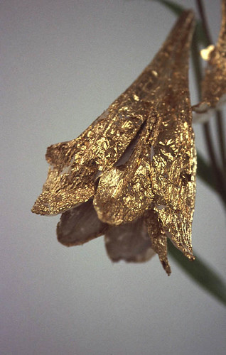 gilded lily 02