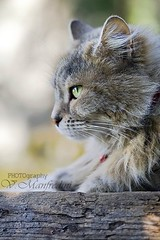 Profilo felino (Batz17) Tags: portrait nature animal cat kitty felino tronco gatto tigrato