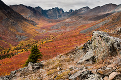 Autumn Colors of Grizzly Creek Valley, Yukon (Marc Shandro) Tags: autumn canada fall nature colors view cloudy outdoor yukon valley backcountry remote wilderness untouched viewpoint uninhabited tundra unspoiled expanse subarctic tombstoneterritorialpark