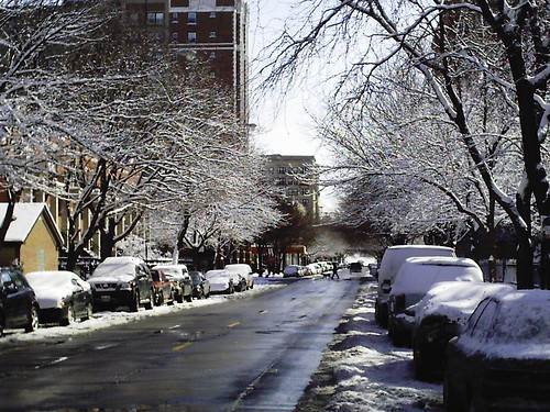 Pratt Ave Snow Trees