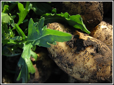 potatoes and rocket copy