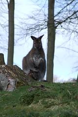Longleat Safari Park #10