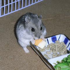 ハム用チーズを食べるコーキ