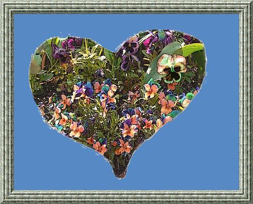 Maman papillon et ses petits vvv cd coeur