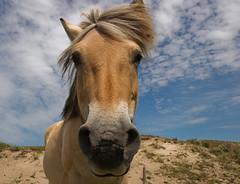 Horse (Maritte Budel) Tags: horse animal artcafe galope supershot anawesomeshot aplusphoto flickrestrellas rubyphotographer worldglobalaward globalworldawards naturescreations