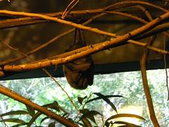 DSCF5836 (dondonnellyjr) Tags: animals zoo louisvillezoo