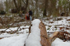 Ore - Paques - tronc - neige