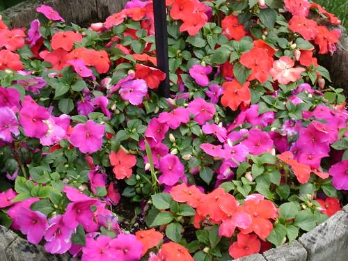 Fleurs,....fruit,.....tout ce qui se mange,...se boit....ou qui vient de la nature.......... - Page 40 2659063394_da35182415