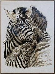 Zebra Love (Liz davies) Tags: painting zebra watercolour associate lizdavies watercoloursocietyofsouthafrica