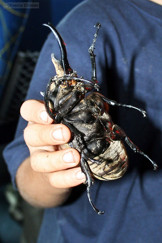 El niño de los escarabajos