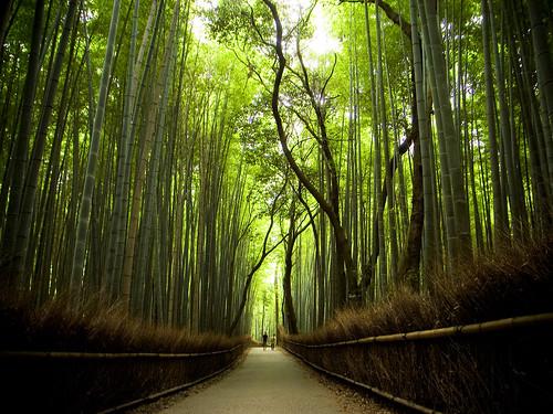Thumb Un camino de bambúes