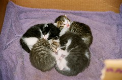 Pile o' kittens