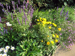 salvia and coreopsis putting on a show