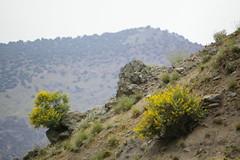 Assif Imserdame (Alan Hilditch) Tags: mountains june high morocco atlas marruecos marokko 2007 marrocos armed moroc imlil assif  almarib imserdame