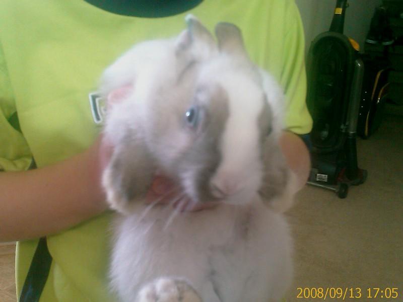 Peter, the Rabbit