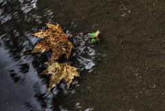 (Turbomatte) Tags: autumn water rain leaf foglia acqua autunno pioggia pozzanghera canon30d ef50f18 theunforgettablepictures autumn2008images