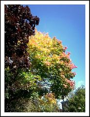 Autumn-splendour (Elaine 55.) Tags: blue autumn trees sky leaves supershot abigfave