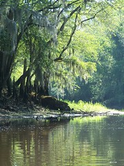 Edisto River: Riverbend (greenkayak73) Tags: friends summer dog beagle water fun kayak southcarolina saturday august cotton kayaking paddling edistoriver photopaddling lowcountryunfiltered