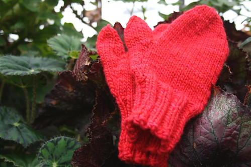 Malabrigo Mittens in greenhouse