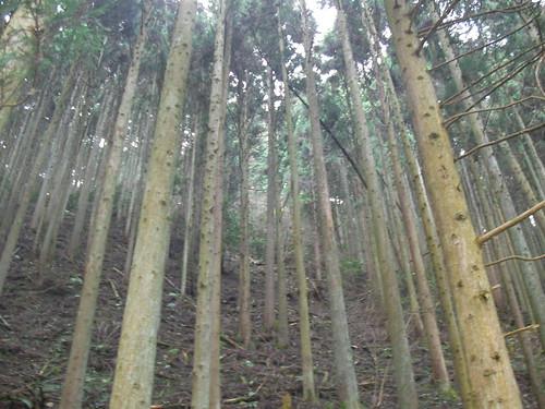 貴船口の木々