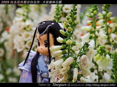 2009 台北花卉展@台北市.大安森林公園