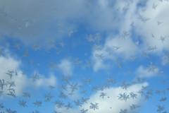 冬朝の雪結晶