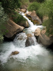 Margoon Waterfall/  (Mahsa3611) Tags: tree nature water waterfall iran shiraz  mahsa  sohrab   sepehri  margoon    mahsa3611
