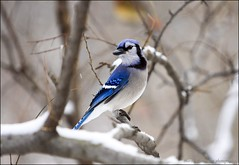 Central Park - birds