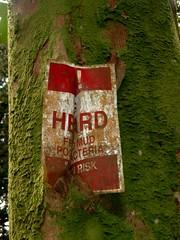 Metal-eating tree (eldan) Tags: travel usa work honolulu hawaiʻi oʻahu manoastream streamrestoration nwetc hyd511