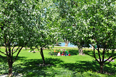Summer is meeting friends and having picnics under apple trees (Poupetta) Tags: finland appletrees summerinhelsinki tlviken tlbay