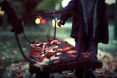 A bench in Redmond (sparth) Tags: seattle red blur leaves canon bench washington leaf kid dof child hand bokeh nostalgia redmond 5dmarkii