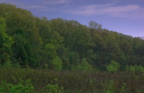 Forest 44 Conservation Area, near Valley Park, Missouri, USA - hillside at dusk 2